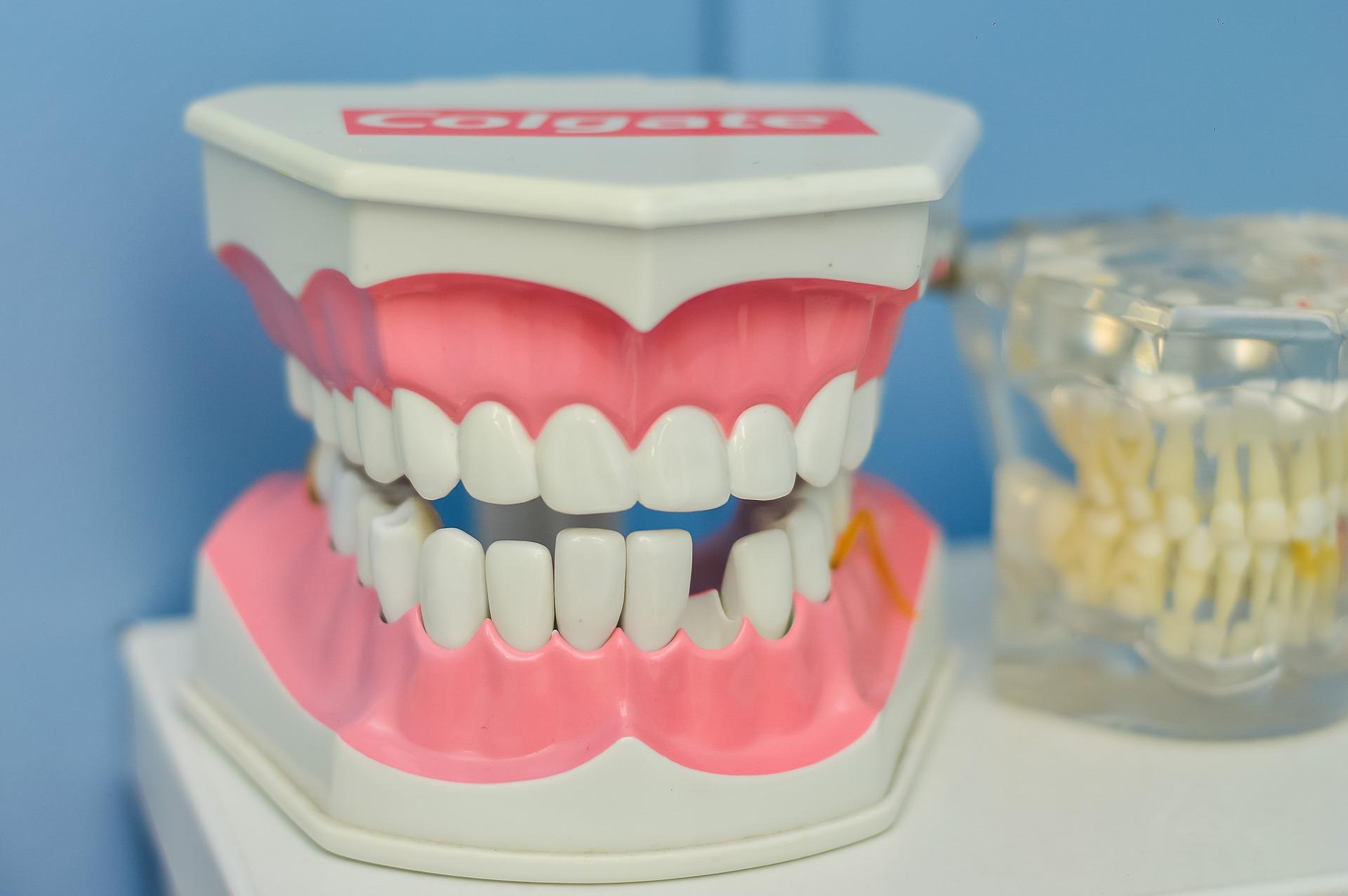 Zubař (4)